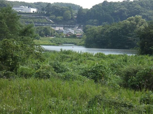 11_多摩川AA_2019.08.17.JPG